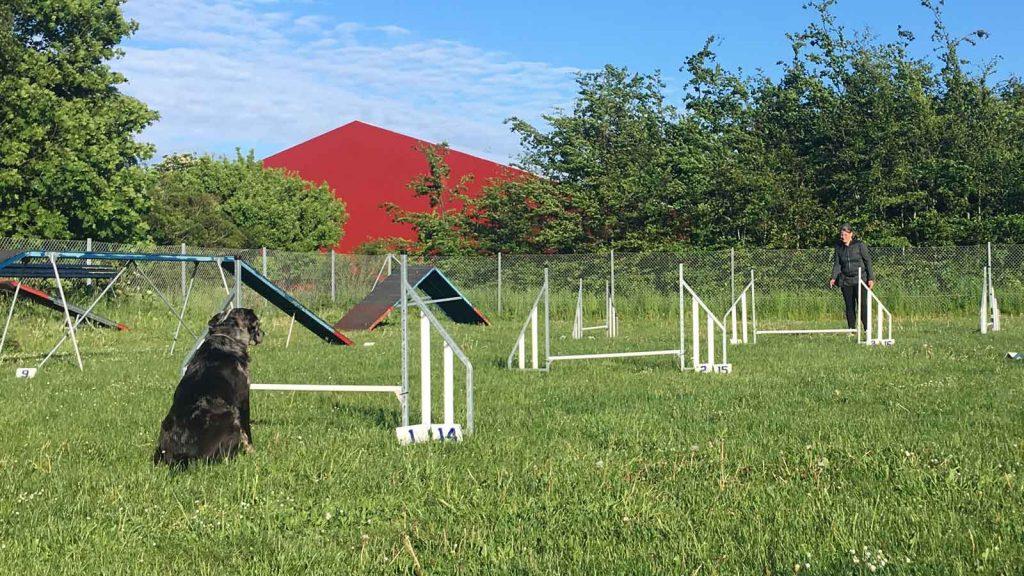 Agility fører giver signal til ventende hund